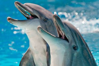 laughing_dolphins