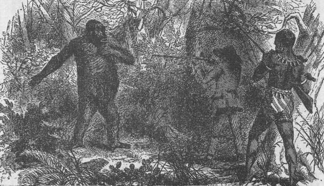 du Chaillu hunts gorilla